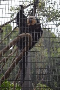 Monkeying Around (7)
