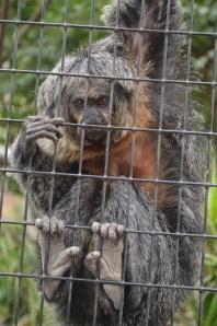 Monkeying Around (8)