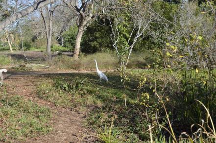 Mr Crane and I Take a Walk (2)