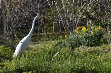 Mr Crane and I Take a Walk (4)