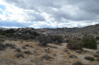 Cam's Bday in Anza Borrego 020