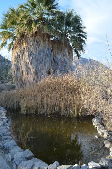 Cam's Bday in Anza Borrego 194