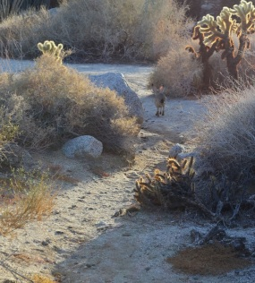 Cam's Bday in Anza Borrego 197