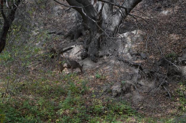Hiking Whiting Ranch (3)