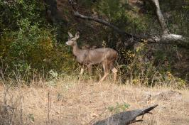 Hiking Whiting Ranch (4)