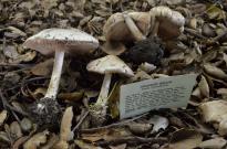 L.A. Mushroom Society (7)