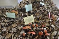 L.A. Mushroom Society (8)
