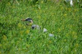 Bird Gathering (1)