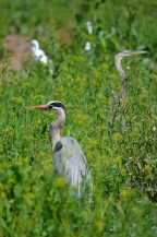 Bird Gathering (10)