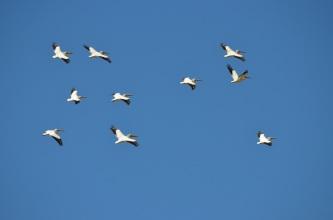 Bird Gathering (3)