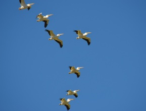 Bird Gathering (4)