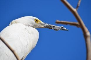 Bird Gathering (5)