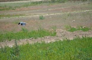 Bird Gathering (6)