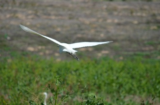 Bird Gathering (8)