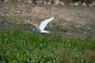 Bird Gathering (9)