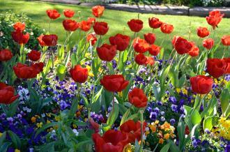 Feelling Spring-y (3)