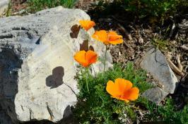 Feelling Spring-y (4)