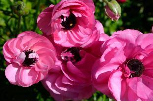 Feelling Spring-y (6)