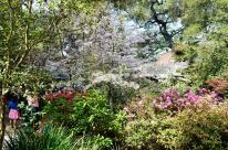 Spring at Descanso Gardens (1)
