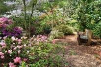 Spring at Descanso Gardens (2)