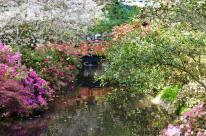 Spring at Descanso Gardens (3)