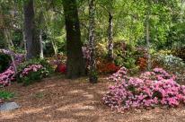 Spring at Descanso Gardens (5)