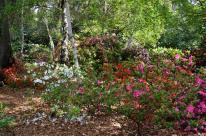 Spring at Descanso Gardens (6)
