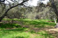 Spring at Descanso Gardens (7)