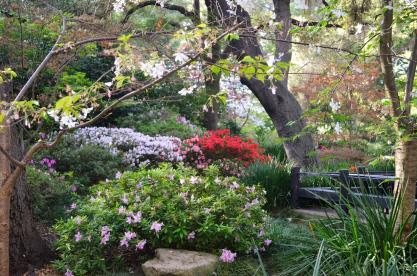 Spring at Descanso Gardens (8)