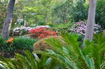 Spring at Descanso Gardens (9)