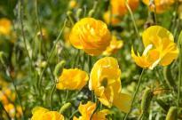 The Flower Fields (16)