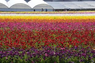 Rows of bold color