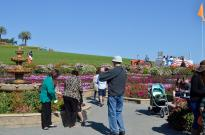 The Flower Fields (2)