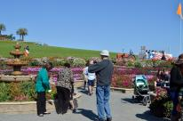 The Flower Fields (2)