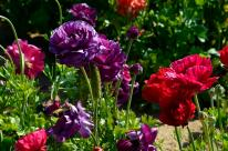The Flower Fields (20)