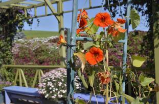 The Flower Fields (4)