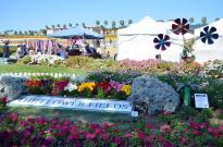 The Flower Fields (9)