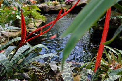 Cooling off at Sherman Gardens, part 1 (3)