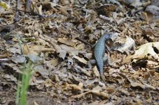 Critters in Oak Glen (7)