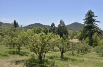 Springtime at Oak Glen (1)