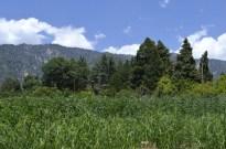 Springtime at Oak Glen (10)