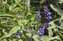 Springtime at Oak Glen (2)