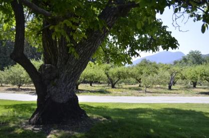 Springtime at Oak Glen, part 3 (11)