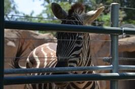 Zoo! 083