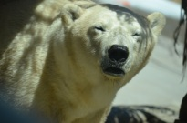 Zoo! 508