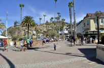 Catalina Sightseeing (24)