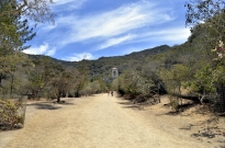 Catalina's Wrigley Memorial Garden (3)