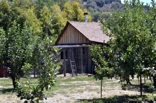 At Riley's Farm (5)