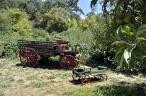 At Riley's Farm (9)