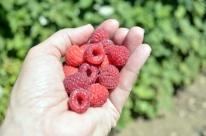 Berry Pickin' (7)